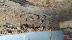 Charlotte Crawl Space Issues